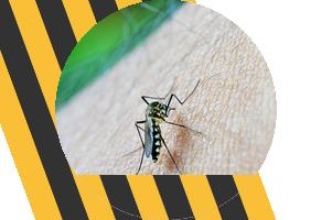 Insektenschutz Kuddewörde Trittau
